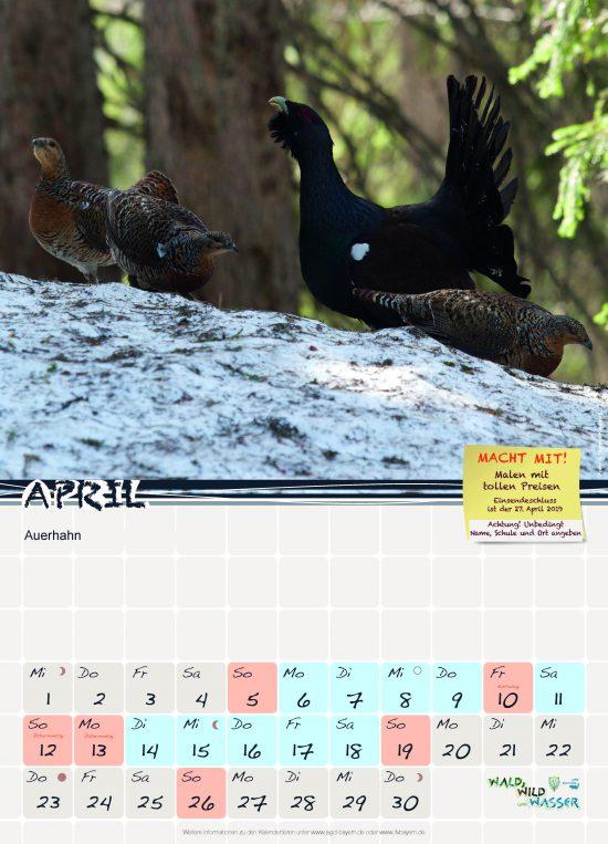 Schulkalender 2020 Auerhuhn