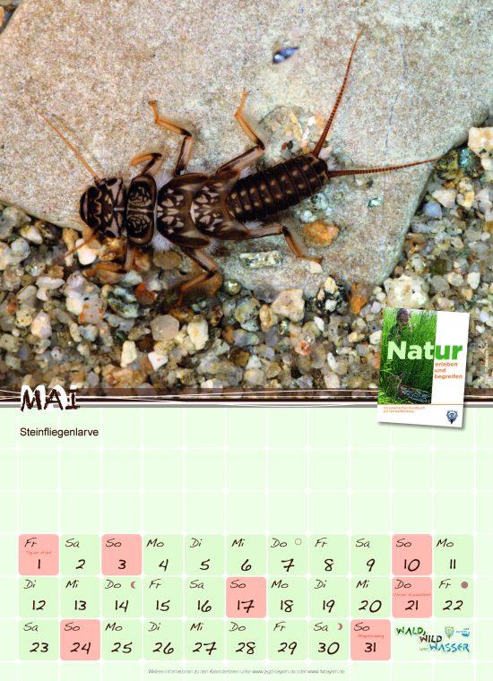 Schulkalender 2020 Steinfliegenlarve