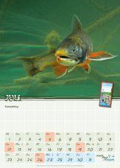 Schulkalender 2020 Seesaibling