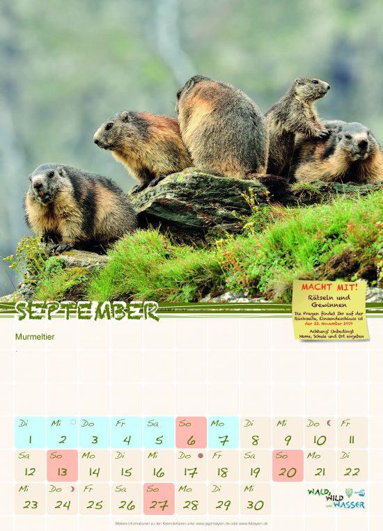 Schulkalender 2020 Murmeltier
